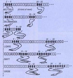 GeneticHomologyDebunked