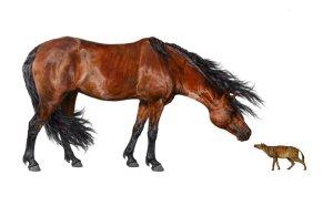 horse_evolution