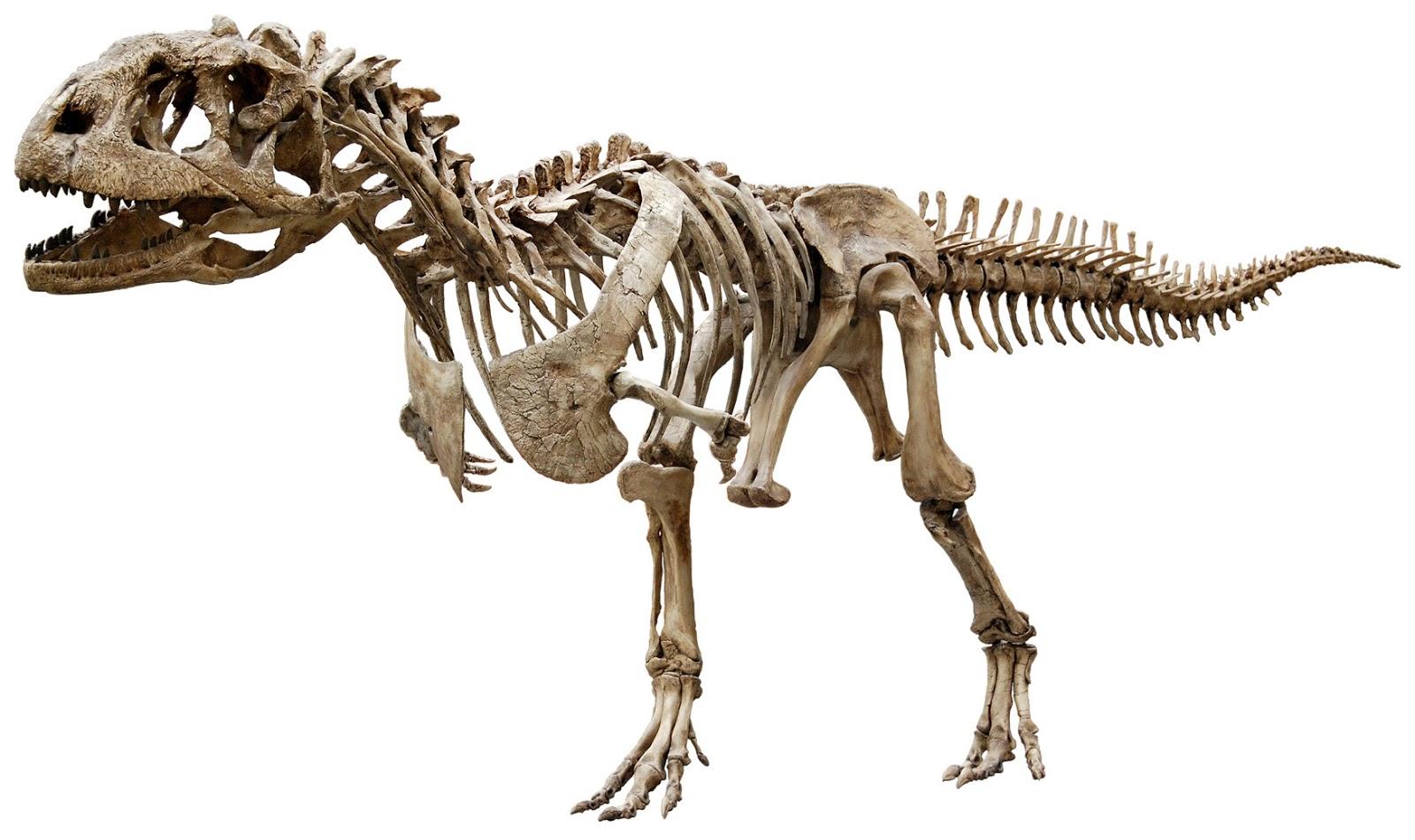 1600 x 950 jpeg 212kBVastatosaurus