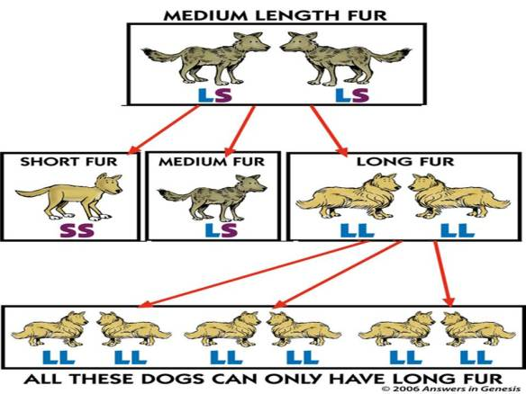 dog-speciation