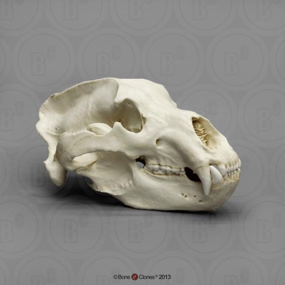 PandaSkull